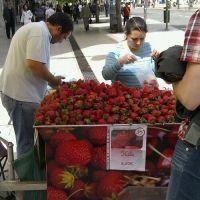En stille dag med jordbær og hummer