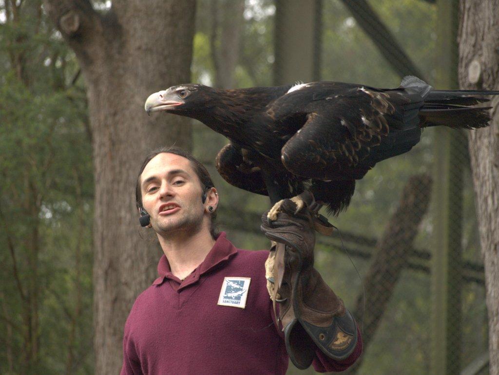 Del af fugleshow i Healesville Sanctuary.