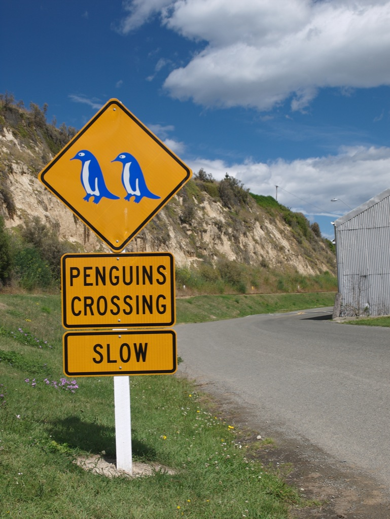 Penguincrossing - Oamaru