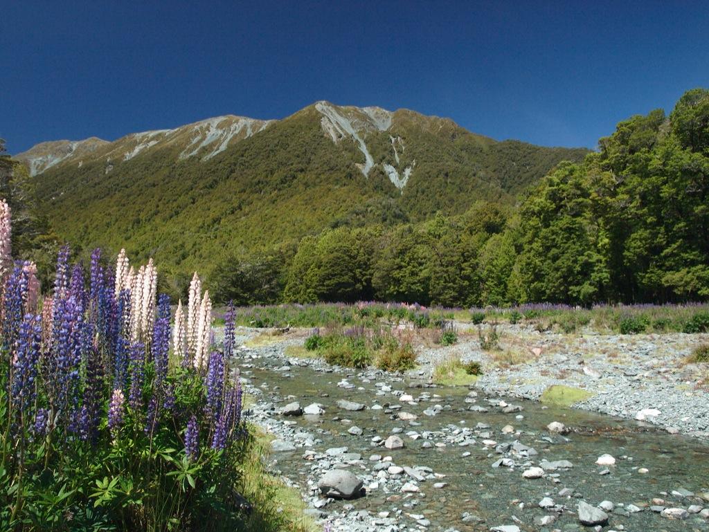 Udsigt uden for Te Anau, på vej til Milford Sound.