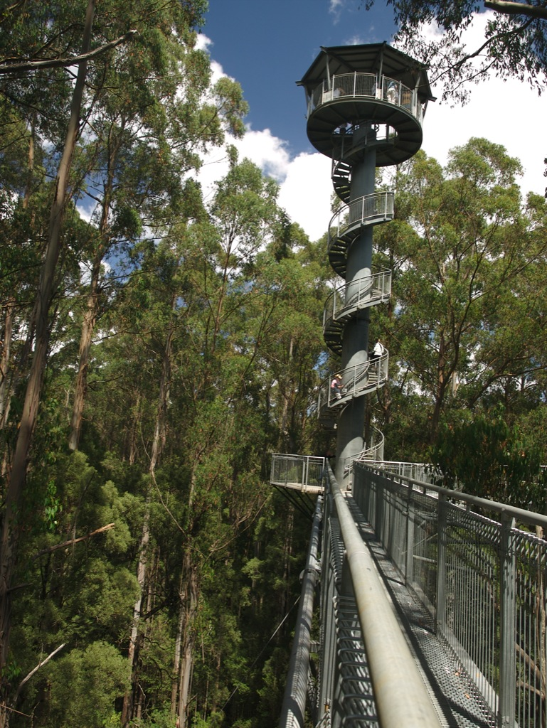The Otway Fly Tree Top Walk.