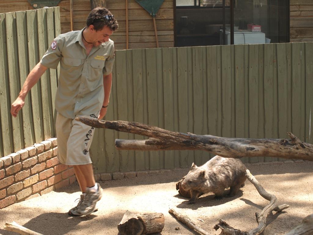 Wombat Show.