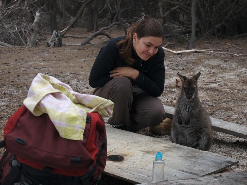 En wallaby ved vores lejr; desværre var den fyldt med blodsugende fluer.
