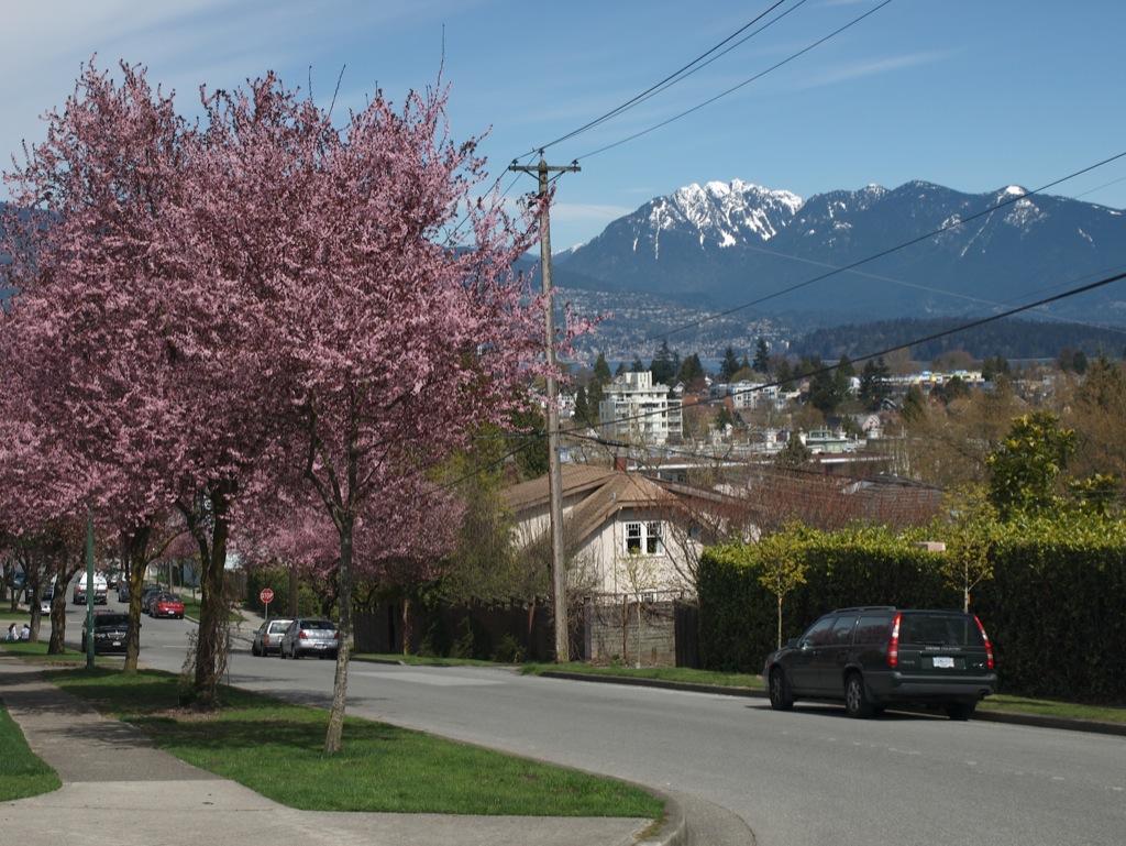 Vancouver med kirsebærtræer.
