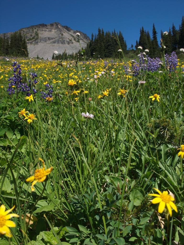 De mange, flotte og duftende blomster.