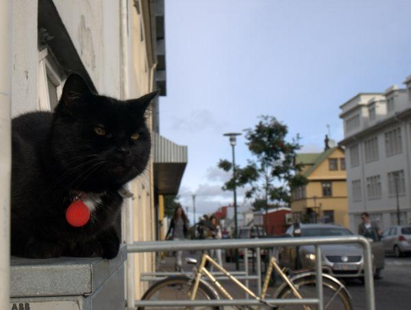 Typisk islandsk gade, nu med kat