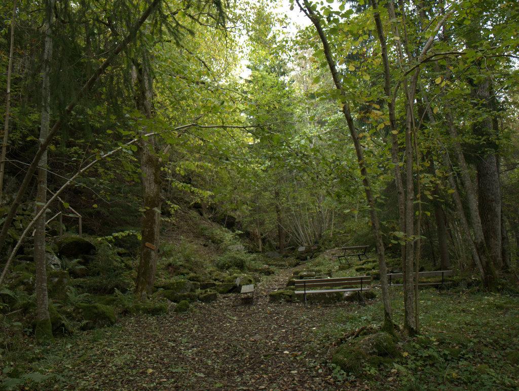 En kirke i skoven