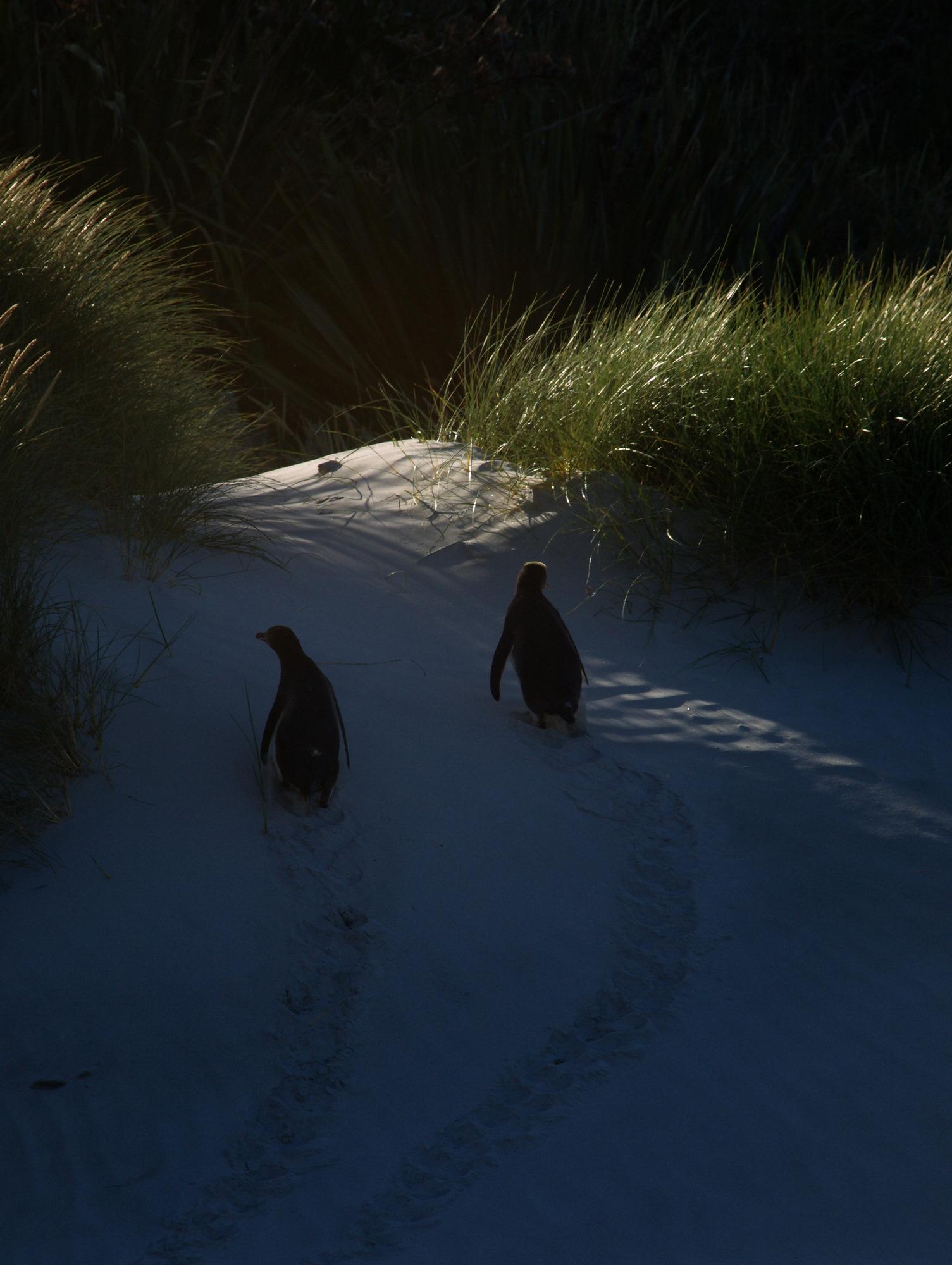 New Zealand: Parløb