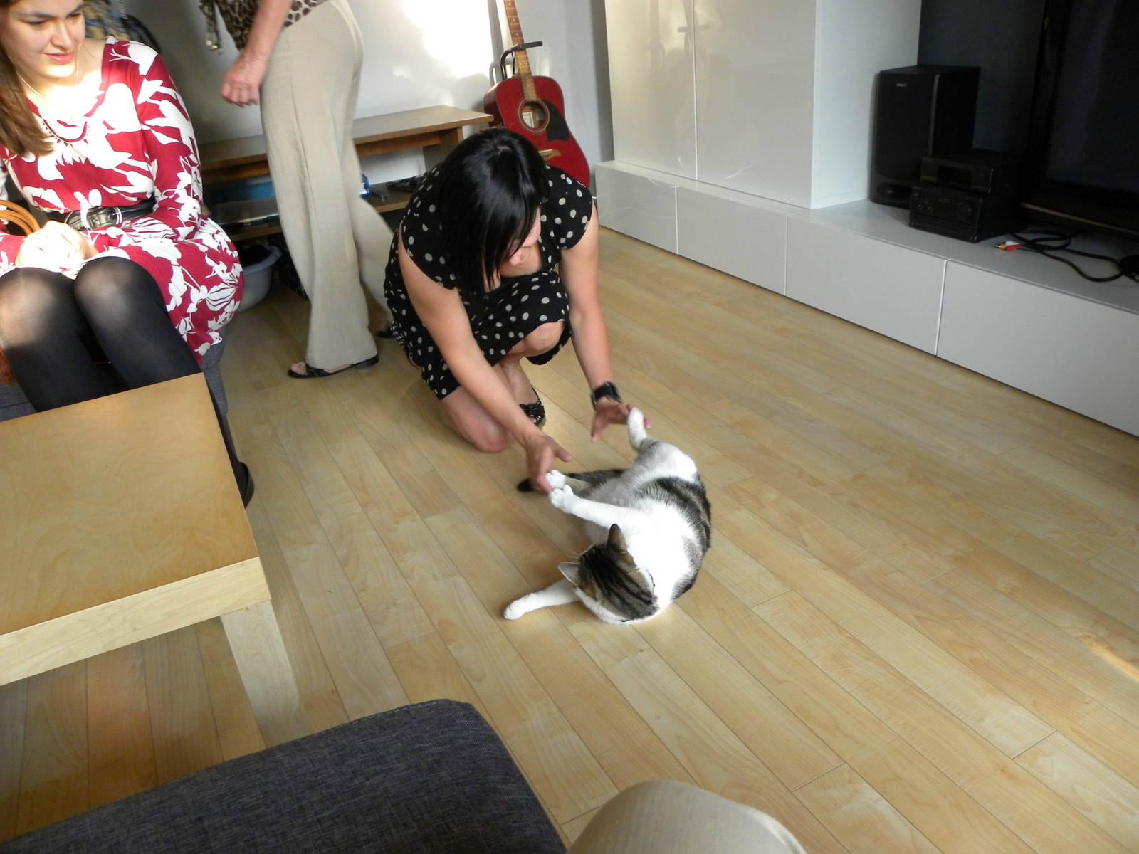 Her bliver der leget med kat - tilsyneladende kan den lidt af blive hevet i benene
