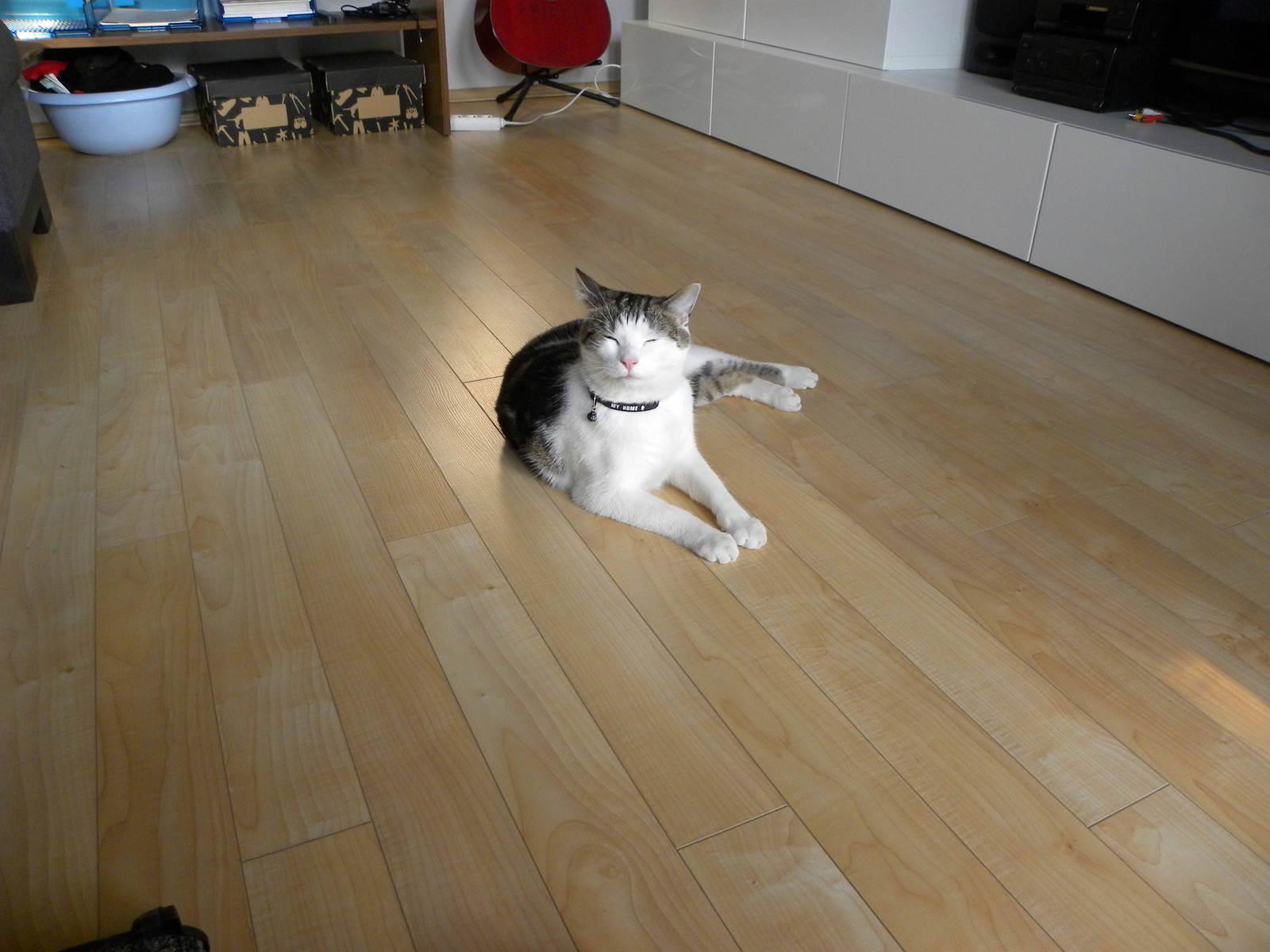 En veltilfreds kat