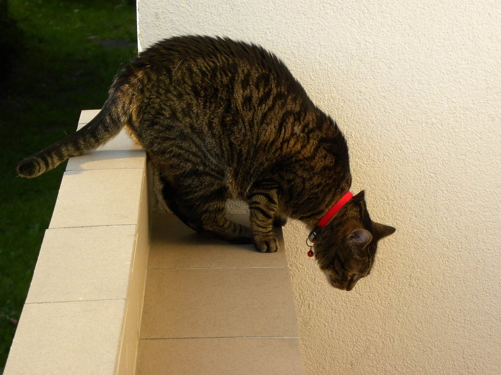 Katten Leeloo