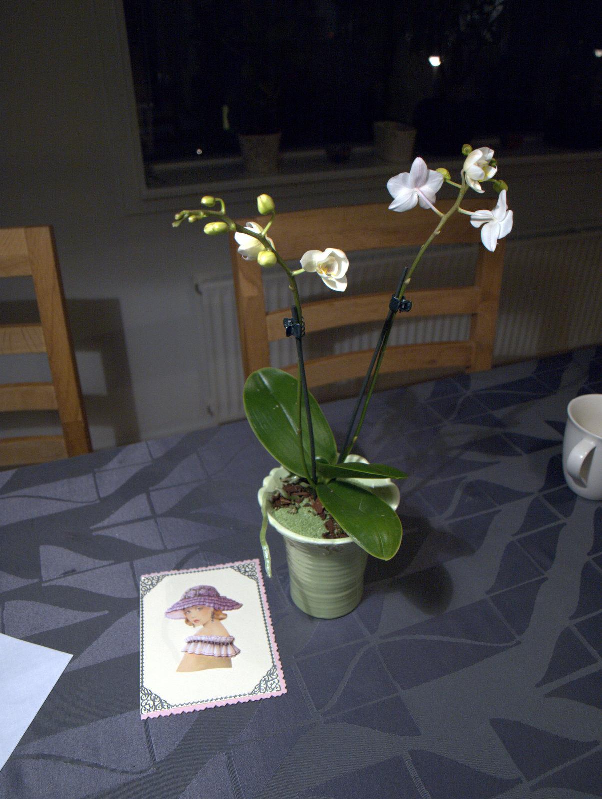 Orkidé fra svigerforældre