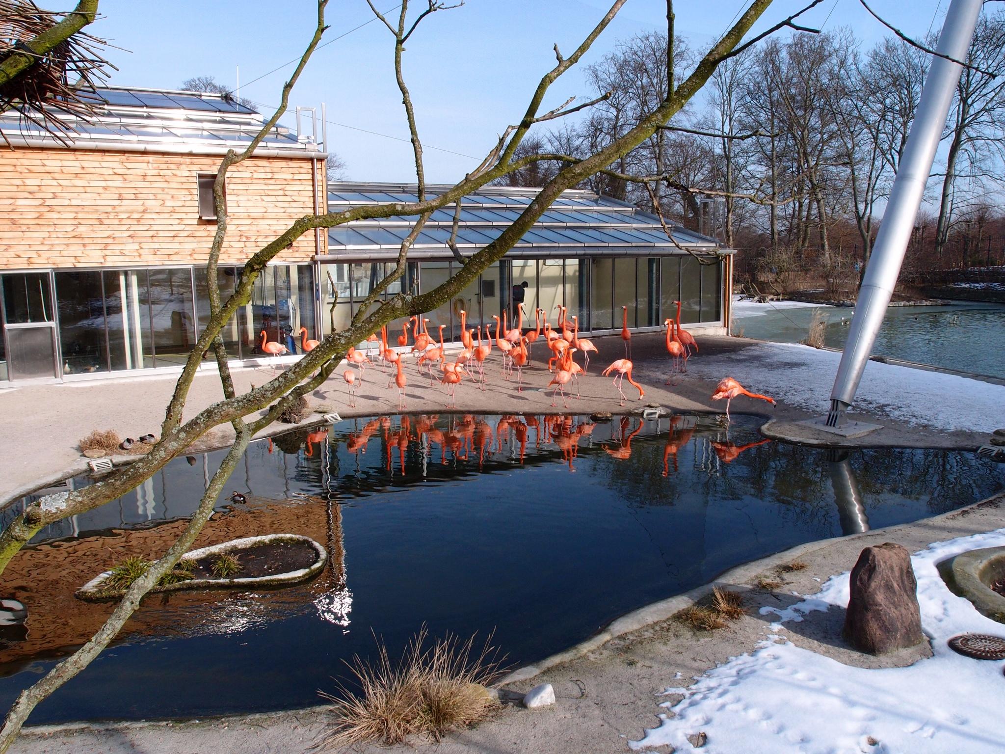 frække bunde Givskud Zoo kort